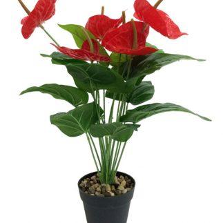 עציץ פרחי קלה בנגיעות אדומות