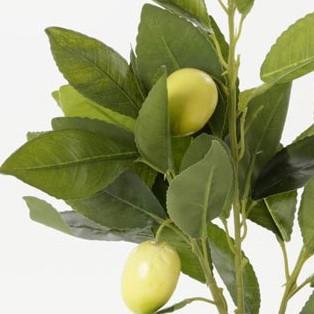 עציץ עץ לימונים