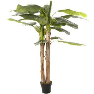 """עץ בננה 200 ס""""מ"""