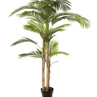 """עץ תמר 180 ס""""מ"""