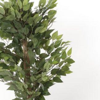 """עץ פיקוס 120 ס""""מ"""