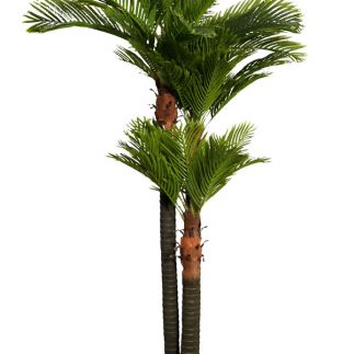 """עץ דקל 250 ס""""מ"""