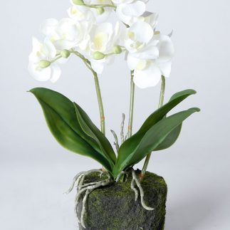 עציץ סחלב לבן – גדול/בינוני