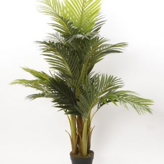 """עץ דקל 155 ס""""מ"""