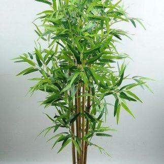 עץ במבו – 168900