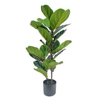 עציץ פיקוס ירוק