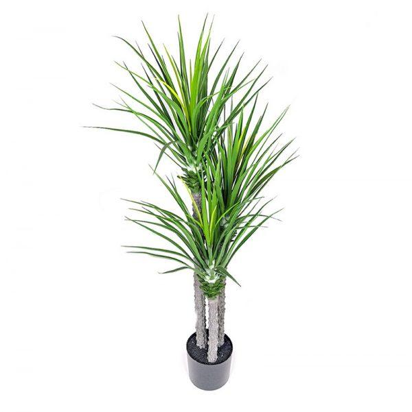 צמח יוקא ענק